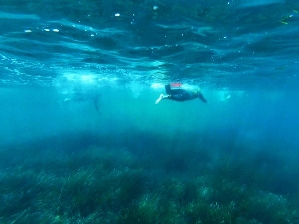 Stage Terra i Mar 06 - Jorge Guzmán Natación Aguas Abiertas en el mar para adultos